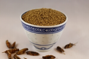 Insect Protein Powders